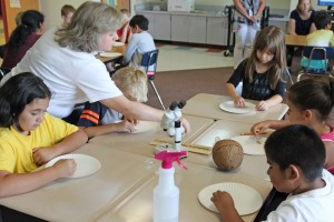 Students examine coconuts and seeds