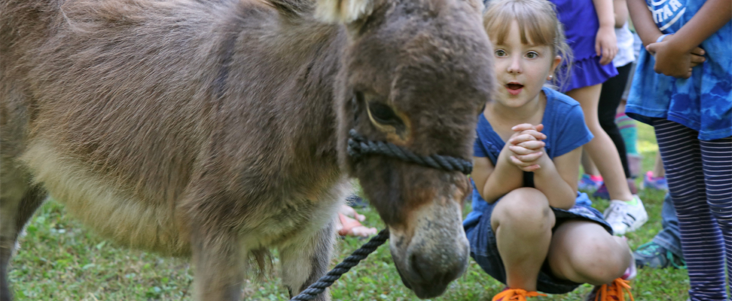 Student looks at donkey