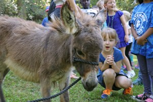 Student looking at donkey