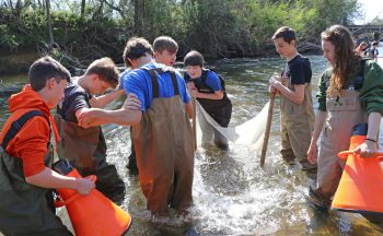 Students wade in the Mills River looking for macroinvertebrates.